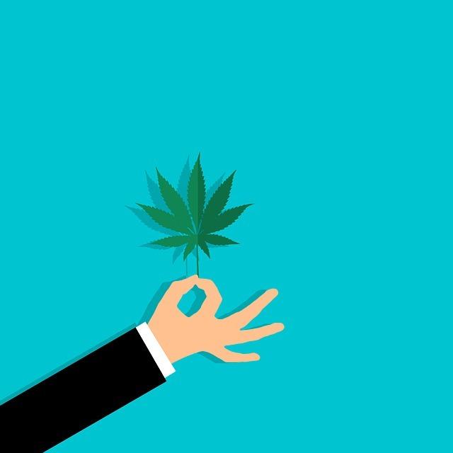 cannabis leaf, agriculture, cbd